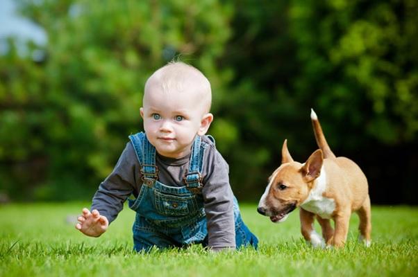 cách tẩy giun và tiêm phòng cho chó con