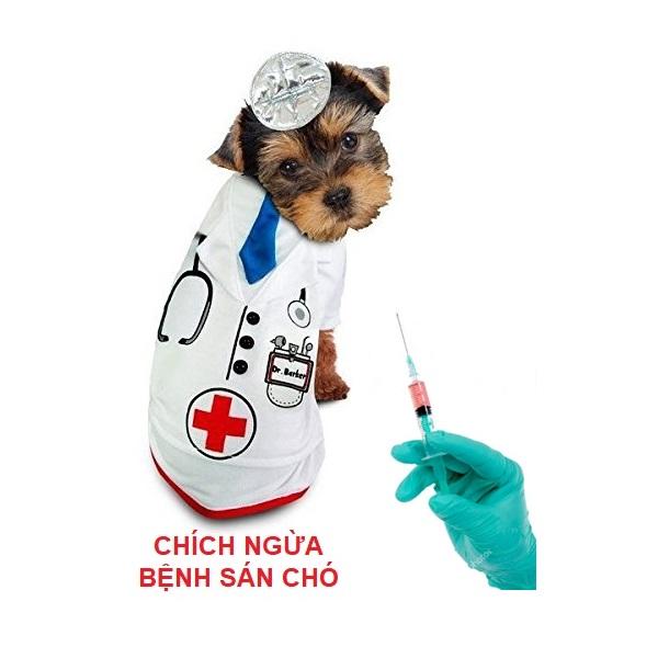 chích ngừa bệnh sán chó