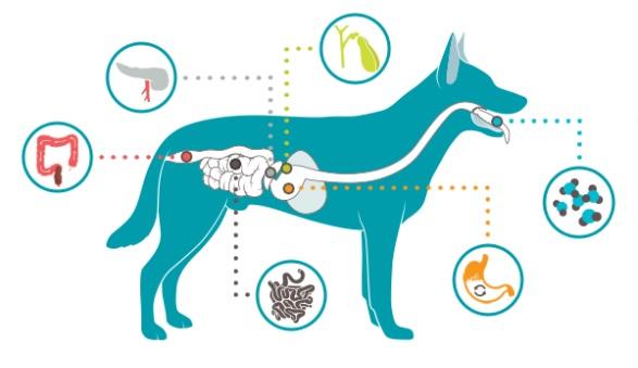 tiêm phòng bệnh đường ruột cho chó