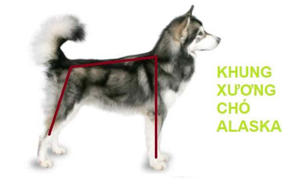 tiêm phòng cho chó Alaska