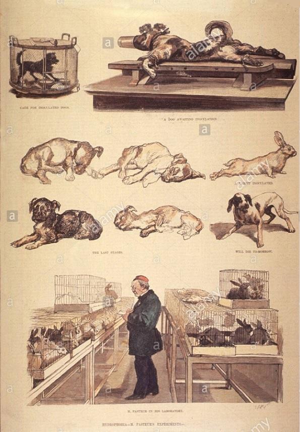 chích ngừa bệnh dại cho chó