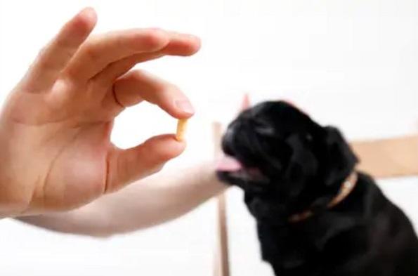 Hướng dẫn cách tiêm phòng cho chó con