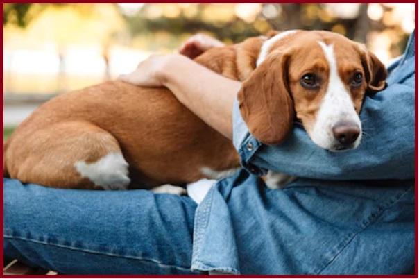 Tiêm phòng cho chó có tác dụng bao lâu