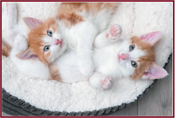 chăm sóc mèo con về nhà mới