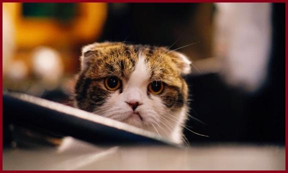 Thói quen của mèo