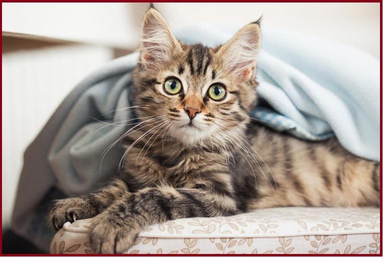 chích ngừa cho mèo