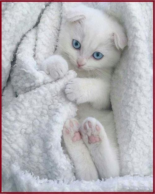chích ngừa cho mèo tại nhà