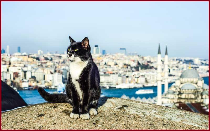Chích ngừa cho mèo ở đâu trong TPHCM