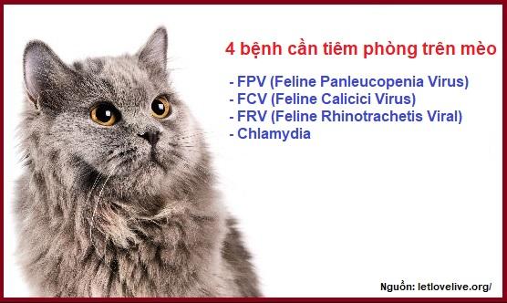 4 bệnh cần tiêm phòng trên mèo