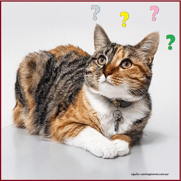 Mèo cần chích ngừa gì?
